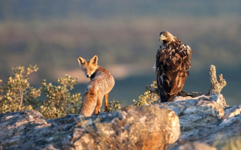 αλεπού και αετός εκδόσεις Ραδάμανθυς