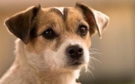 σκυλάκι εκδόσεις Ραδάμανθυς