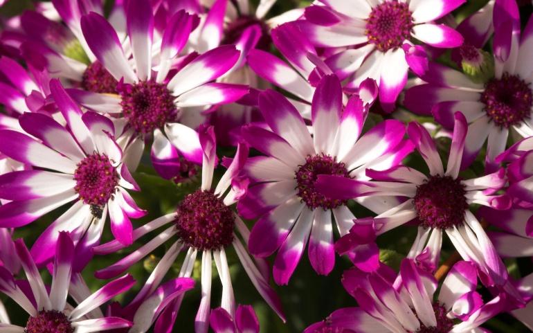 Όταν ανθίζουν τα λουλούδια