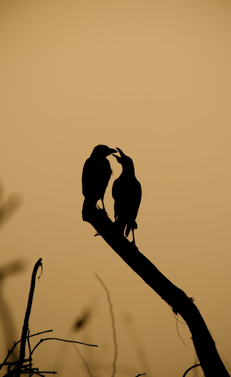 silhouette of birds perched on tree branch