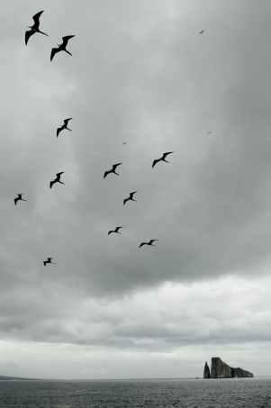 birds flying under cloudy sky